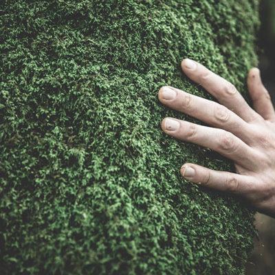 Séjour detox dans la forêt landaise